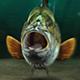 Fishing Opener DR
