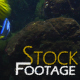 """Fishes 10"" Stock Footage in Full HD 1920x1080"