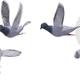Flying Pigeons (4-Pack)