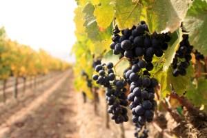 Vinske ture Srbija