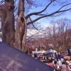 花見の季節なので、ココマイスターの長財布とともに【飛鳥山公園】まで行って来ました