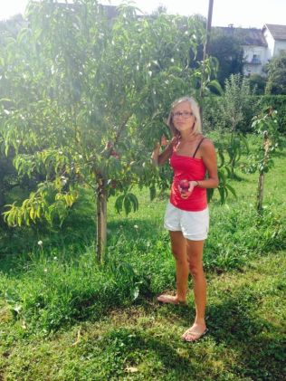 nectarine and many other fruits and vegg in the garden/ plantation