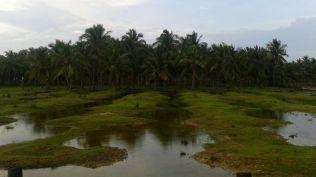 Kalpitiya_Anuradhapura031