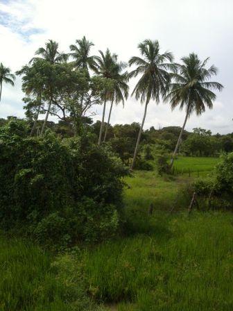 Kalpitiya_Anuradhapura107