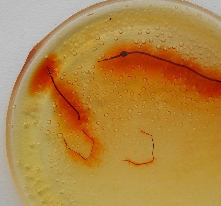 Проволока палладий в азотной кислоте