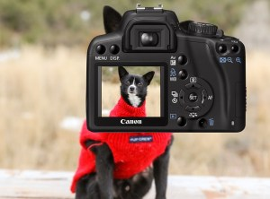 Dog in the camera display