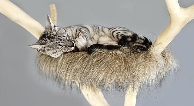 Cat on the cat tree