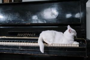 a cat on piano bars