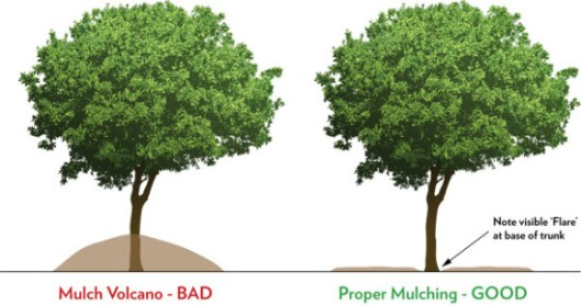 01398813960r-mulching-landscaping-beds