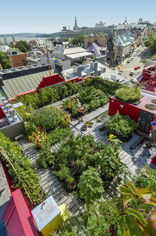 rooftop-garden-hvq-850