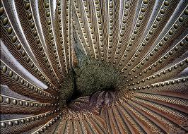 Seribu Mata Burung Ruai  Pricilla Dewi Nakita