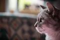 「猫の恩返し」 バロンとムタの名セリフ集