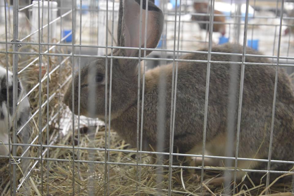 Europarlamentarci podržali ukidanje uzgoja životinja u kavezima