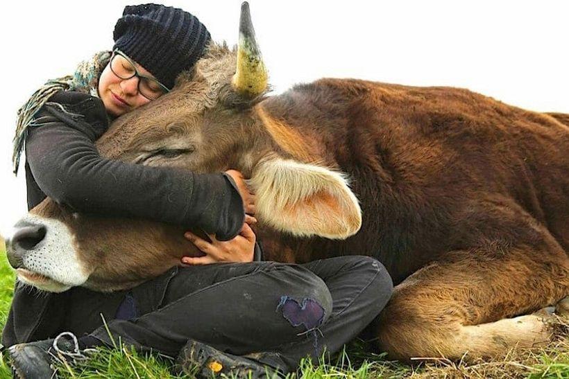 U povodu Svjetskog dana veganstva // Prijatelji životinja: 'Nijedna životinja ne želi u klaonicu. Svaka životinja na tanjuru je bik Jerry!'