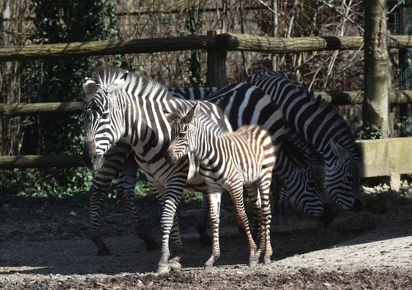 Zoološki vrt Zagreb bogatiji je za novog člana