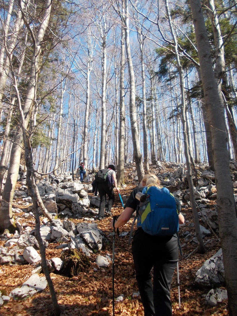 vrbovec planinari (2)