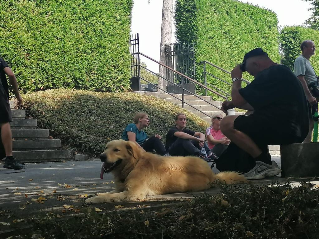 🎦 Križevačkim hodočasnicima u Fodrovcu se priključio pas i stigao je s grupom do Marije Bistrice