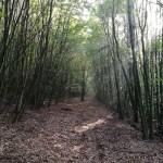Hrvatske šume: 'Neovisni stručnjaci odbacili primjedbe europarlamentarca Waitza'