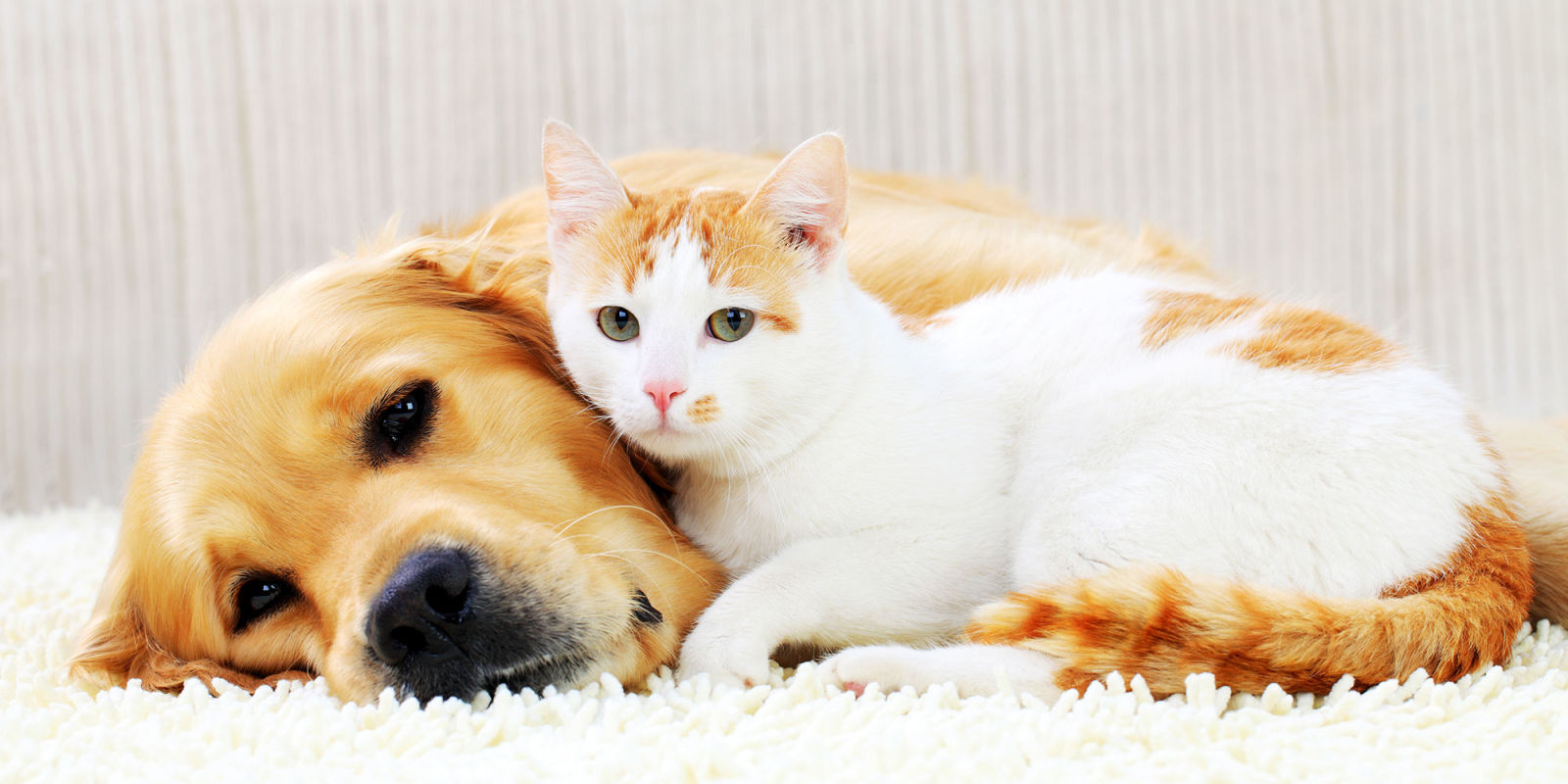 The Big Differences Between Dog And Cat People Revealed