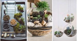 Vytvořte si kouzelné terárium osázené krásnými sukulentními rostlinami!