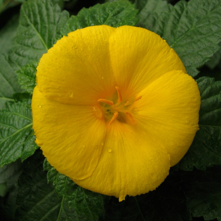 Dew-covered yellow flower