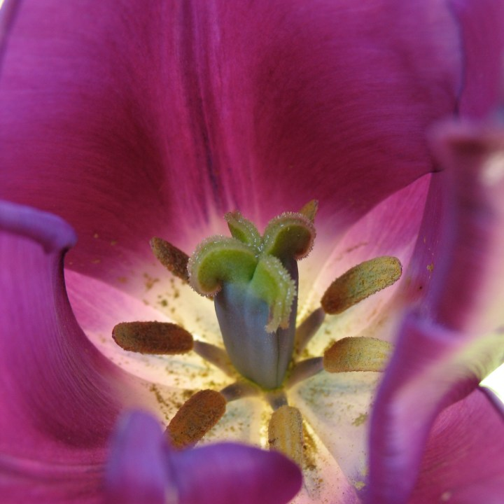 Close-up of a flower's stamen covered in pollen