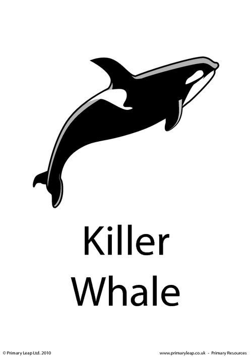 killer whale flashcard printable flashcard killer whale