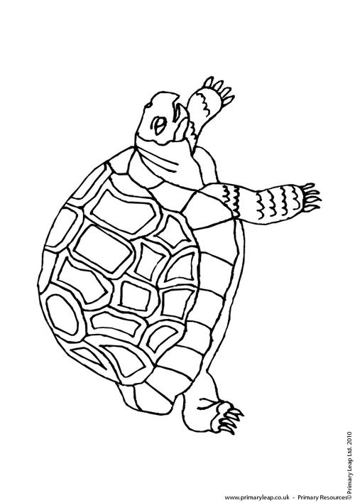 green sea turtle colouring page colouring picture green
