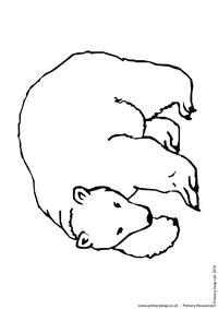Polar bear colouring page 2
