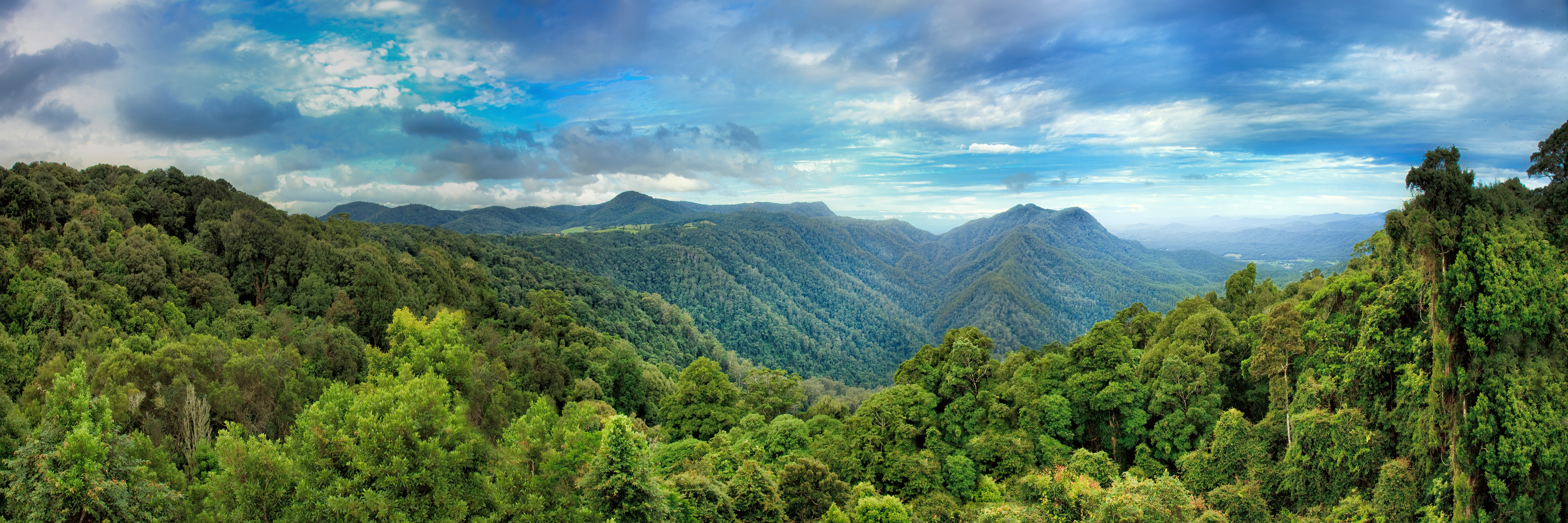 Geography What Is A Rainforest Level 1 Activity For Kids
