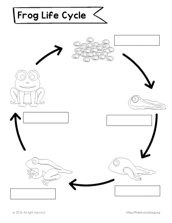 How to teach children about life cycle