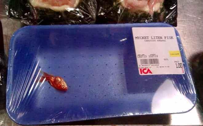 mycket liten fisk