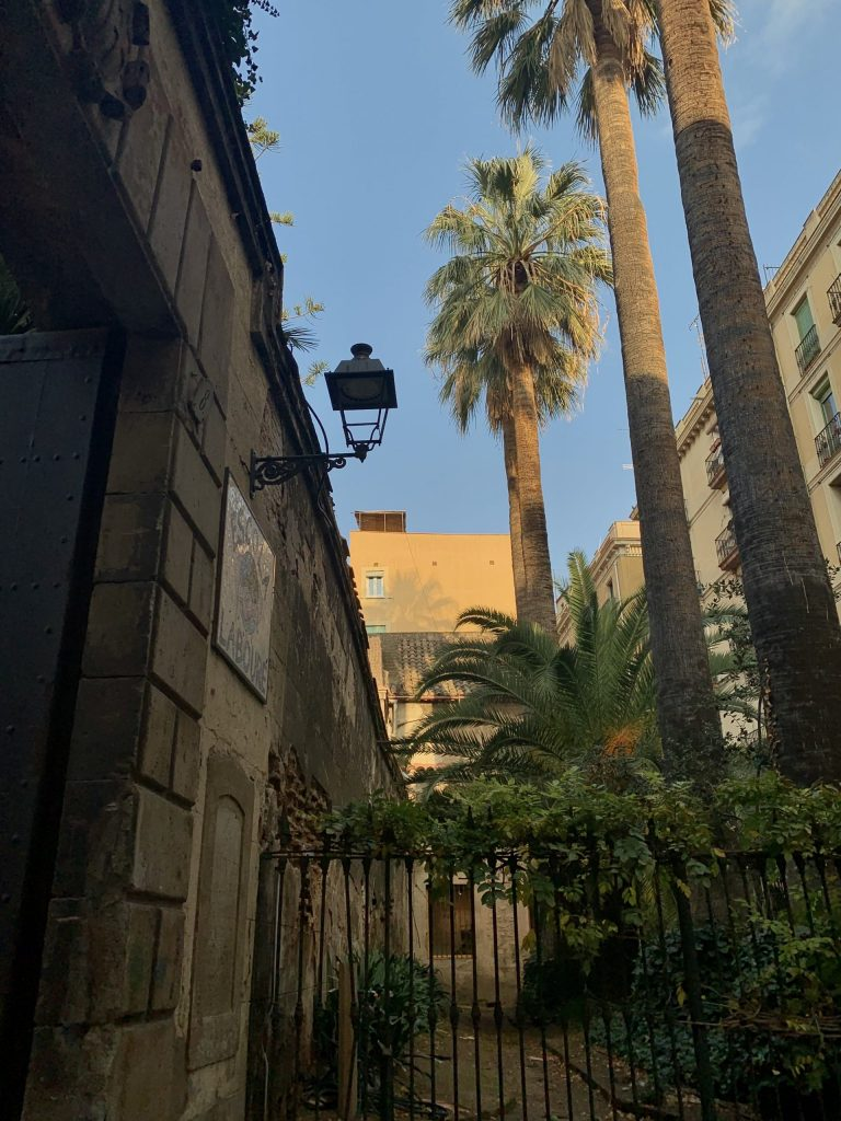 Palm trees and wall on the streets of Barcelona