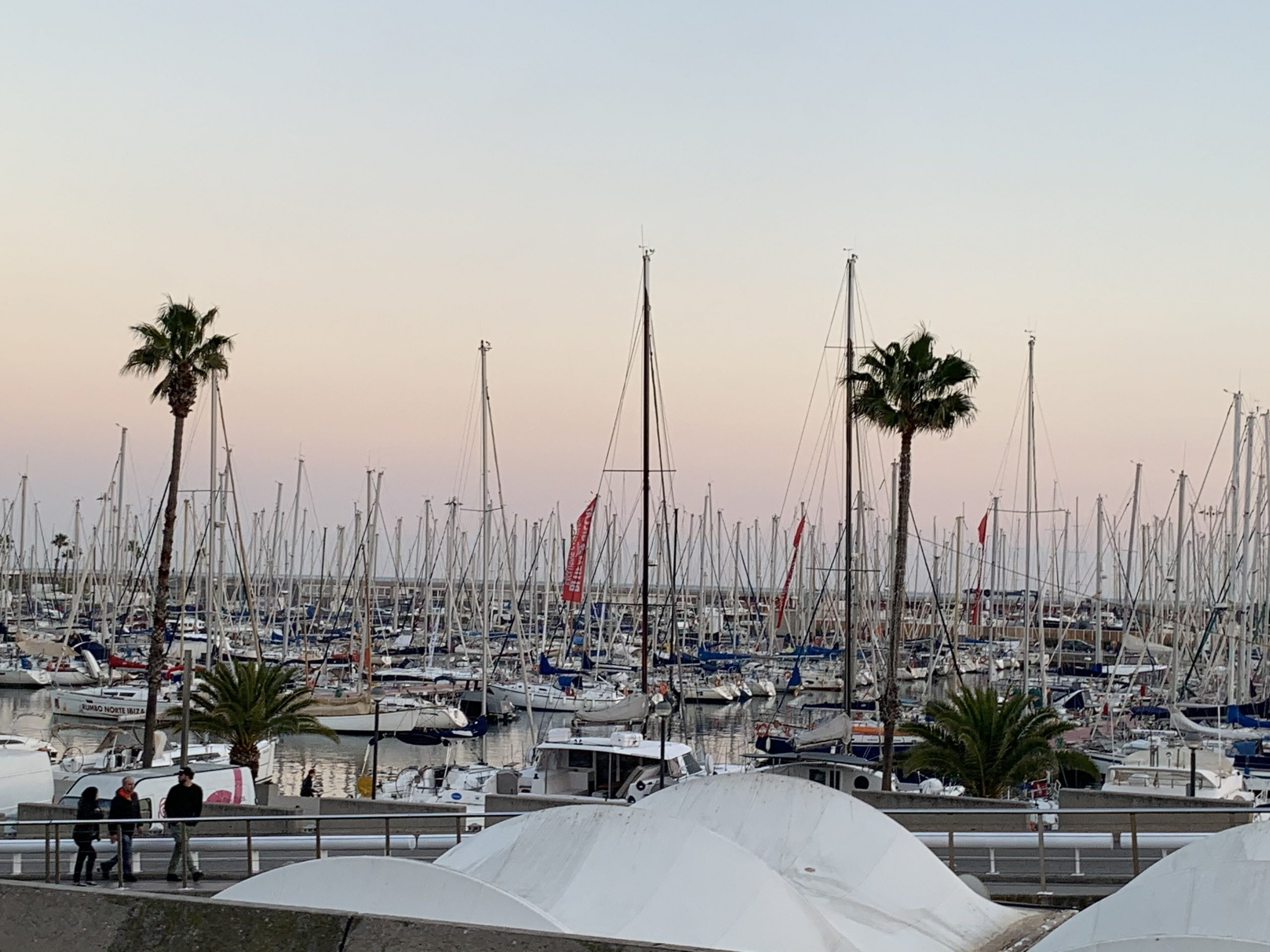 Many sailboat masts parked in harbor. Palm trees line sidewalk in front of harbor