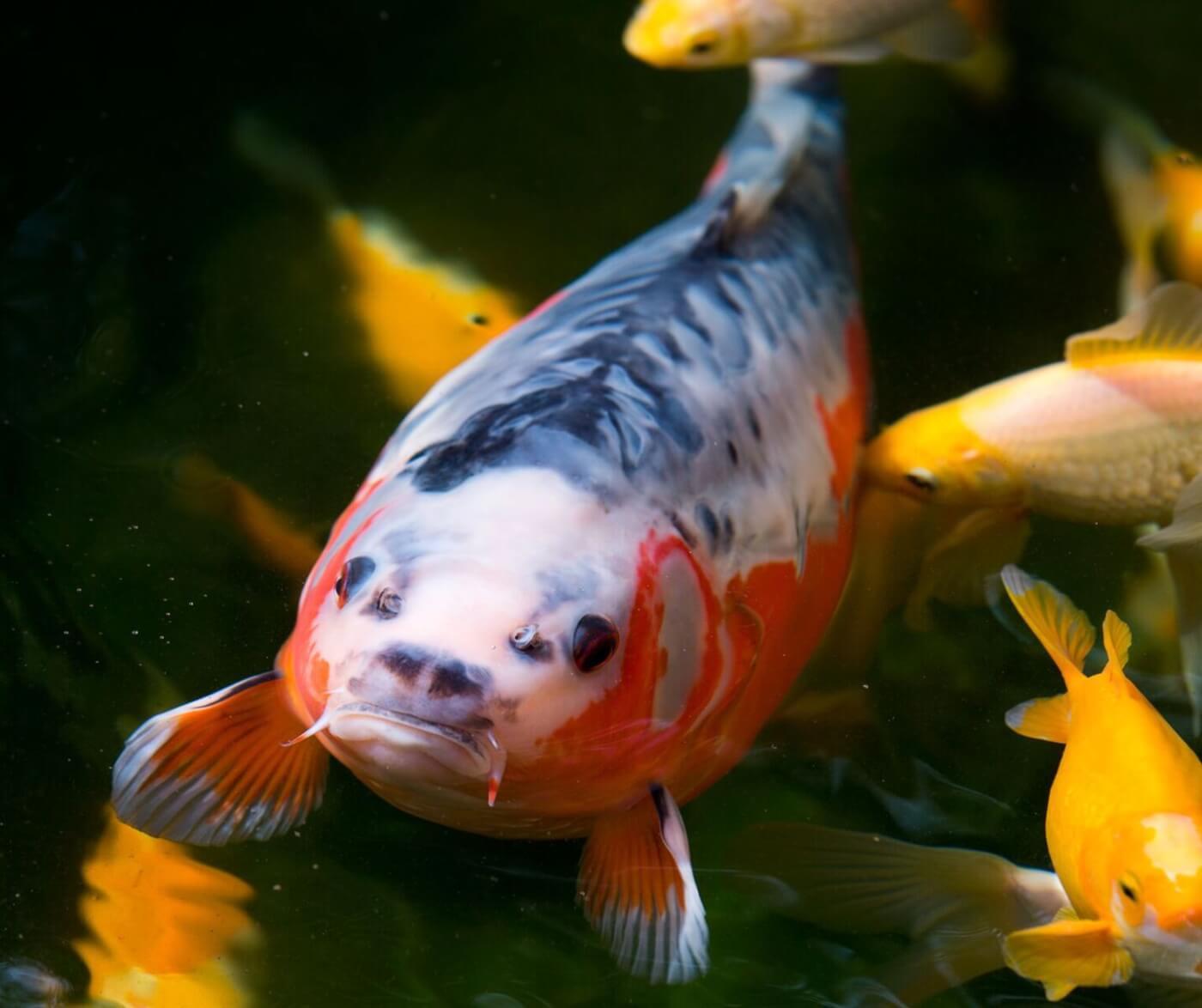 PETA Prime Fish Are Friends Not FoodPart 2