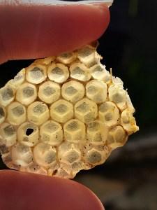 Honey comb piece