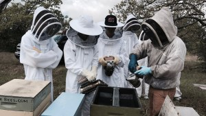 beekeeping and apiary events