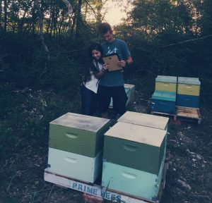 private beekeeping experience in bcs