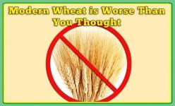 Wheat sucks