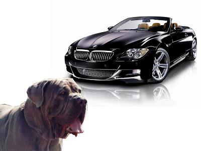 NOVO SISTEMA BMW CRAP