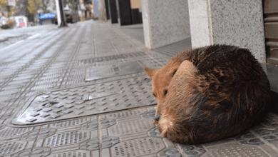 Photo of Sociedade de Proteção aos Animais de rua de Viçosa recebe terreno para construção de canil