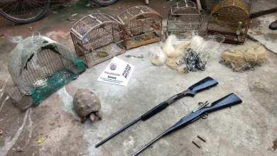 Photo of GRANDE OPERAÇÃO DA PMMA APREENDE DIVERSOS ANIMAIS SILVESTRES E ARMAS