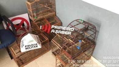 Photo of PMMA APREENDE 9 PÁSSAROS SEM LICENÇA EM TEIXEIRAS