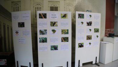 Photo of Programa Marcelo Andrade recebe exposição do Projeto Aurita