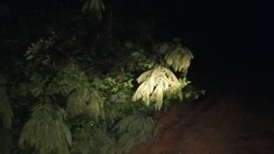 Photo of Árvores e telhas caem com a chuva em Guiricema nessa sexta (15)