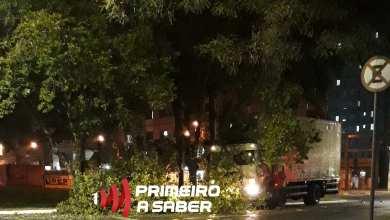 Photo of Caminhão bate em árvore próximo a UFV