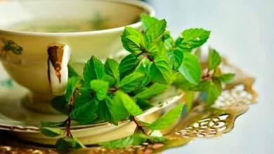 Photo of Começa em março o curso de plantas medicinais e acupuntura