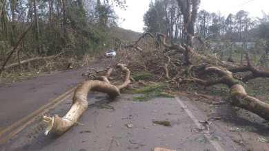 Photo of Secretário de Obras esclarece situação de áreas afetadas por Chuvas