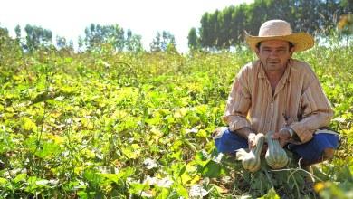 Photo of SEF disponibiliza emissão de Nota Fiscal Avulsa especial para produtores rurais