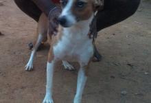 Foto de Cadelinha precisa de um lar